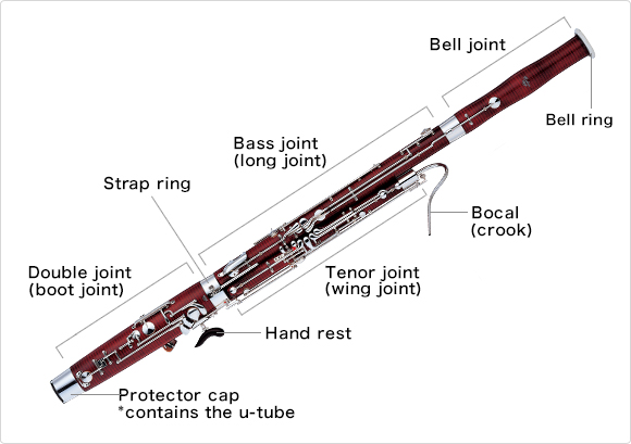 The Structure Of The Bassoon What Kind Of Musical