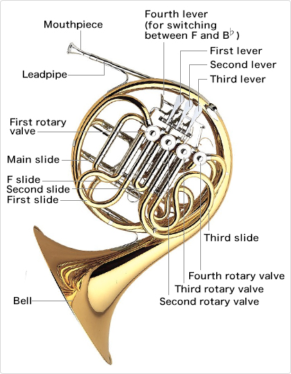 The Structure Of The Horn Learn The Parts Of The Horn - Musical Instrument Guide
