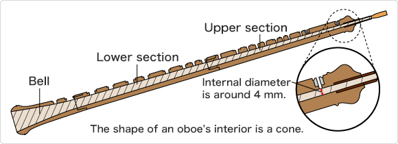 A cross-section of an oboe.