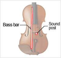 The position of the bass bar and the sound post