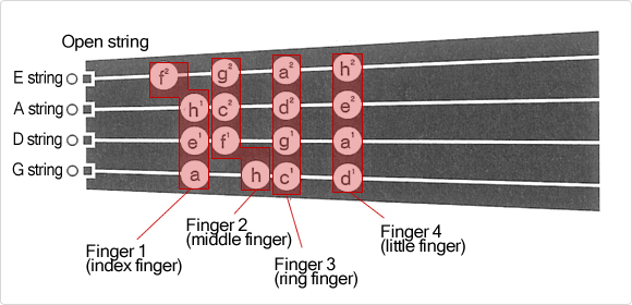 The finger positions on the fingerboard in the first position